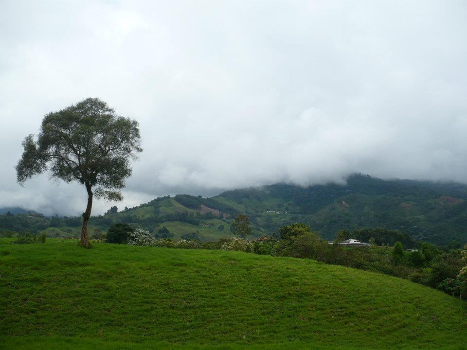 Bien hermoso y verde el paisaje de Salento