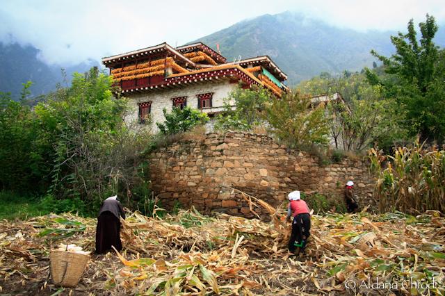 Campesinas en la villa de Zhonglu