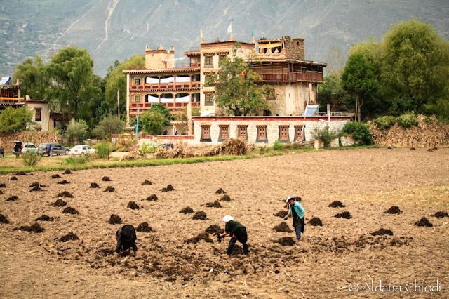 Campesinos en la villa de Zhonglu