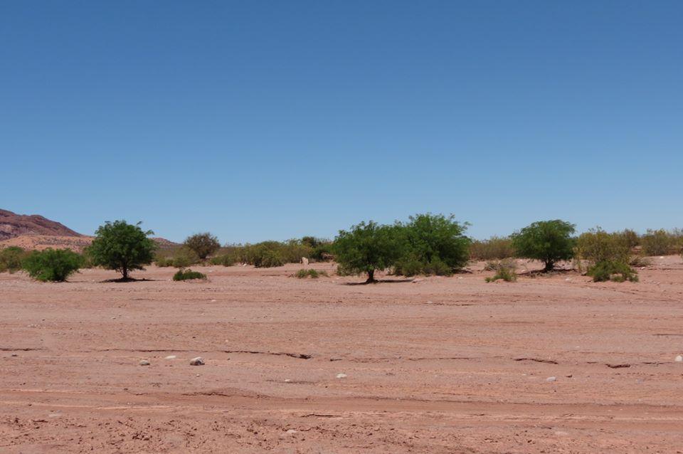 talampaya paisaje 2