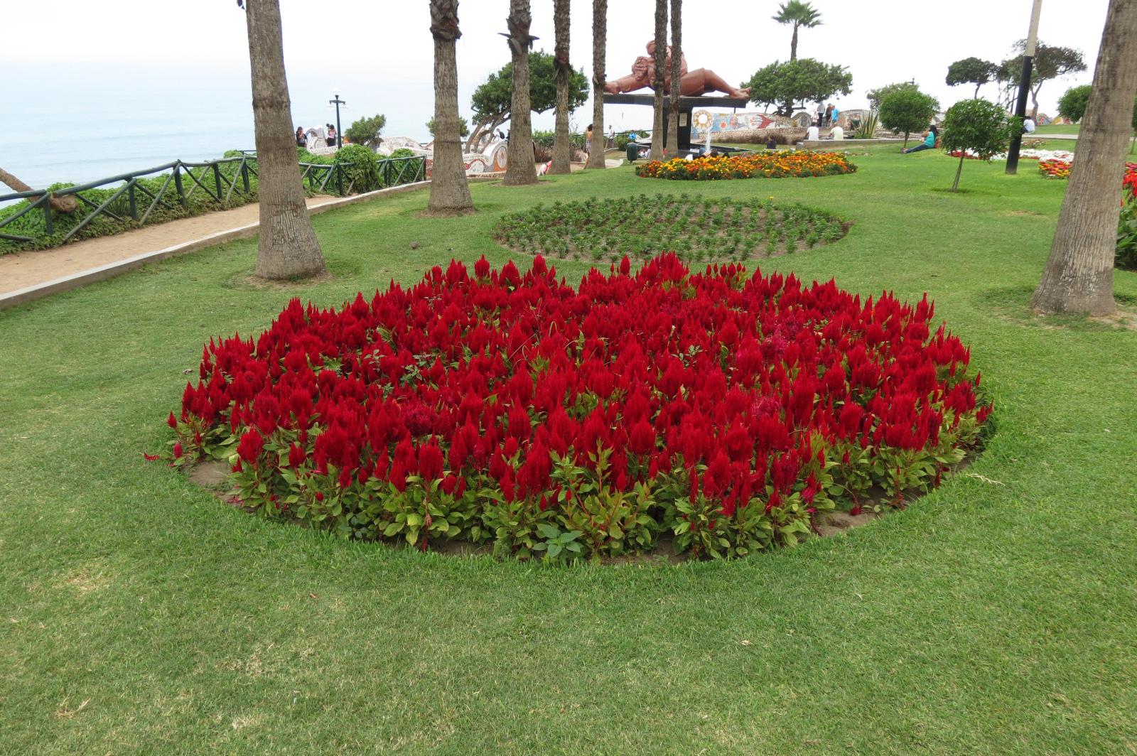 jardin flores en malecon