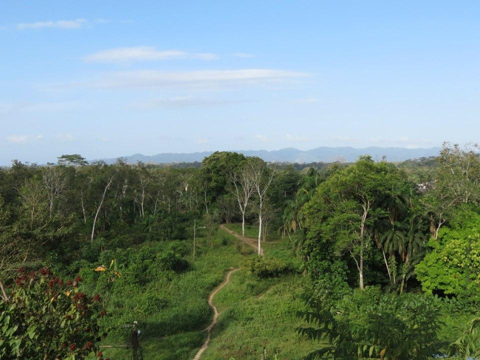Si bien he estado en medio de la jungla, no me considero fanático de ella.