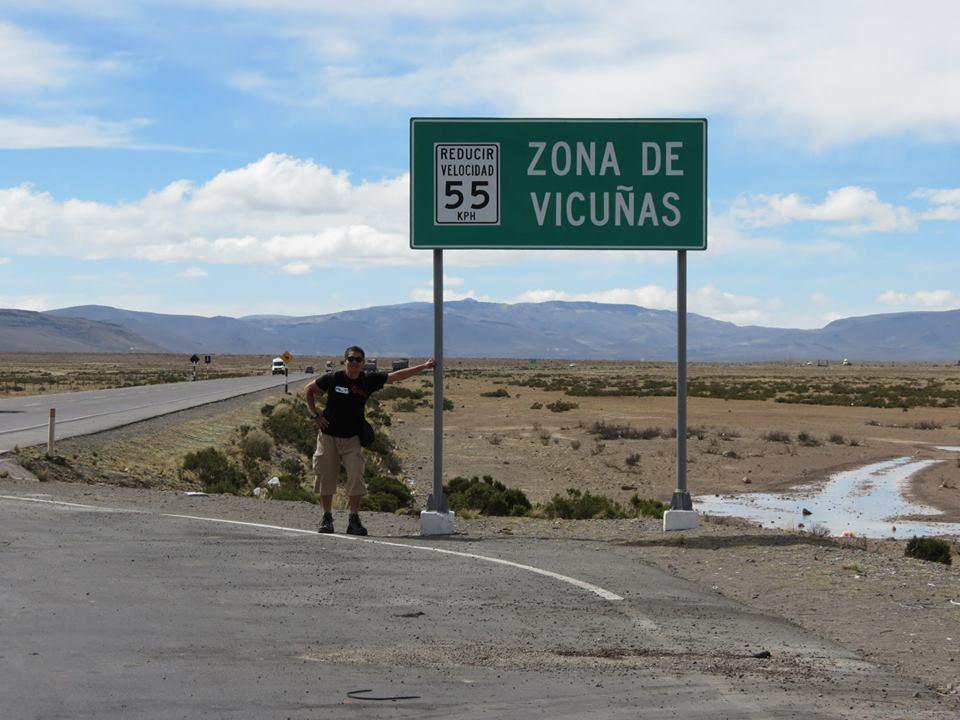 zona vicuñas 2