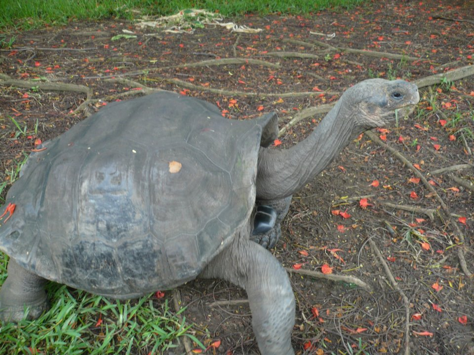 tortuga gigante ecuador